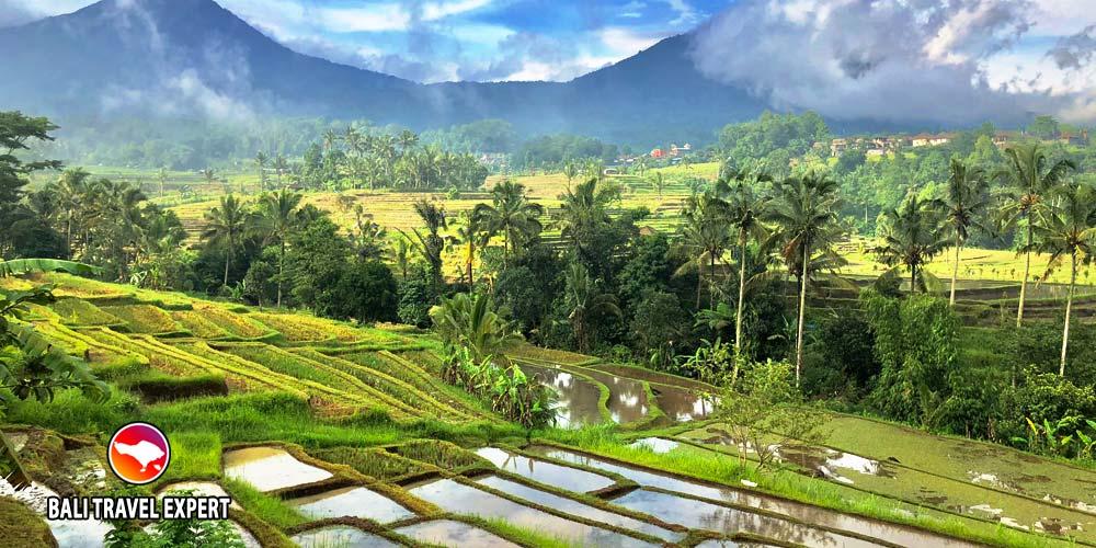 Jatiluwih-rice terrace-Bali Travel Expert