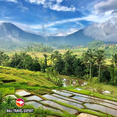 Jatiluwih Rice Terrace - Bali Travel Expert