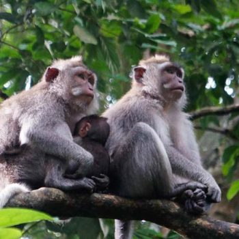 Ubud Monkey Forest - Bali Travel Expert