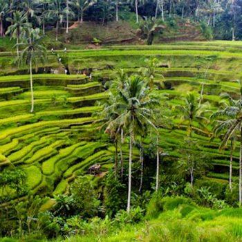 Tegallalang-Bali Travel Expert