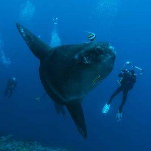 mola mola diving Bali Trips - Bali Travel Expert