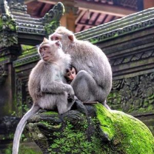 Monkey Forest - Bali Travel Expert