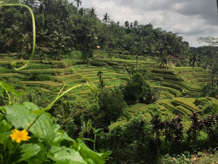 Rice Fields in Bali You Must Visit